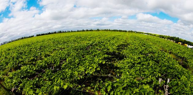 Aberta consulta pública para aperfeiçoar plano de agricultura de baixo carbono